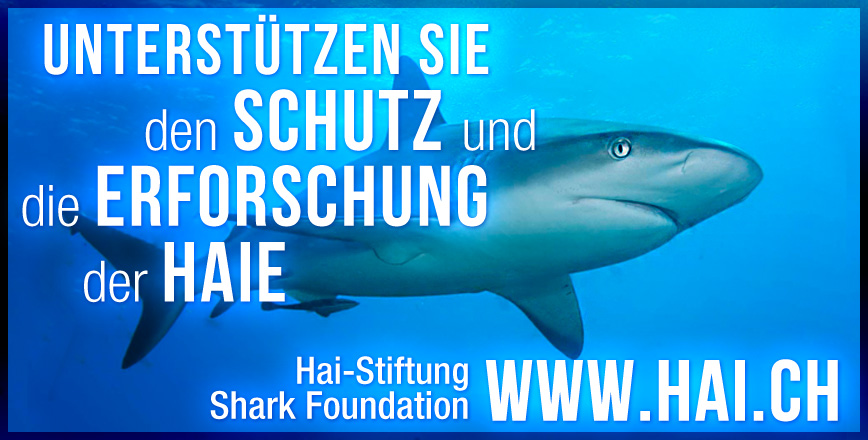 Banner Shark Foundation - Graphic Design Portfolio