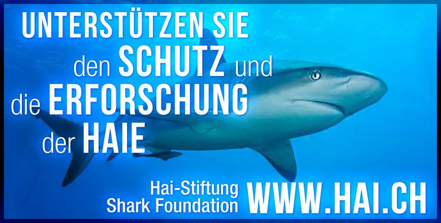 Banner Shark Foundation - Graphic Design Portfolio